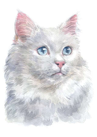 Water colour painting of Turkish van Cat