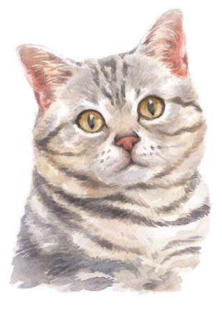Water colour painting of American Shorthair cat Standard-Bild