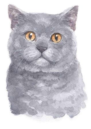 Water colour painting of British Shorthair cat Standard-Bild