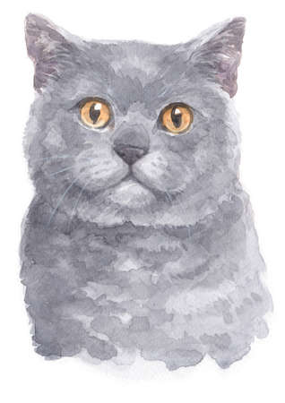 Water colour painting of British Shorthair cat Stok Fotoğraf