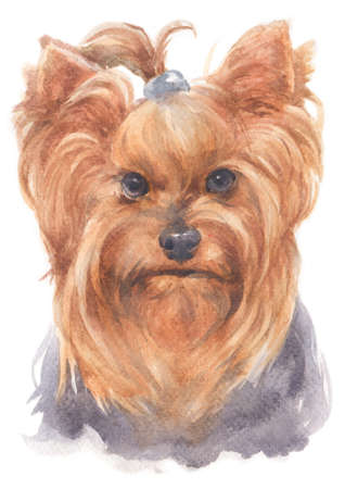 Water colour painting of York Shire Terrier dog.