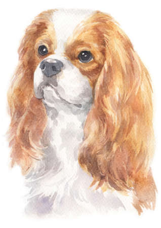 Water colour painting of Cavalier King Charles Spaniel dog.