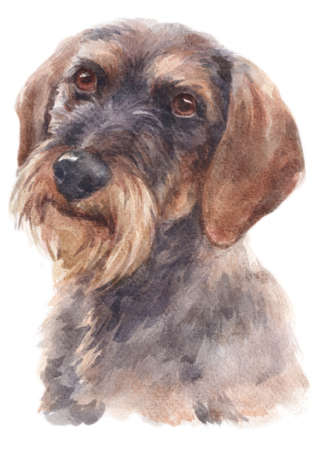 Water colour painting of Dachshund