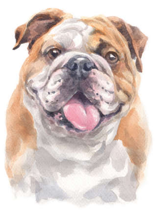Water colour painting of bulldog Standard-Bild
