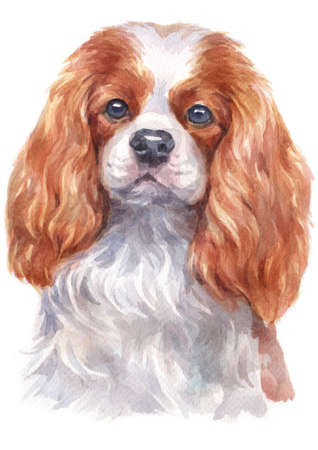 Water colour painting of Cavalier King Charles Spaniel
