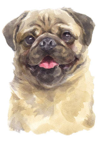 Water colour painting of Pug.
