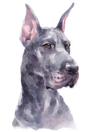 Water colour painting of Great Dane