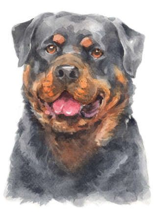Water colour painting of Rottweiler dog