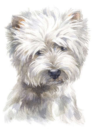 Water colour painting of west Highland white Terrier