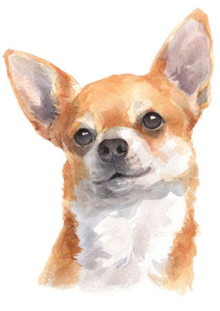 Water colour painting of Chihuahua Standard-Bild