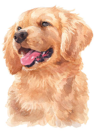 Water colour painting of Golden Retriever