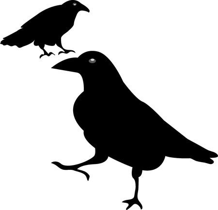 Raven, Crow, Black Birds