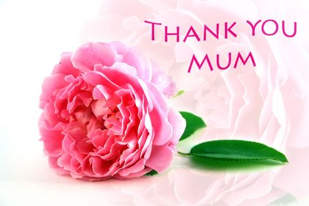 Mothers Day Thank You Greeting with pretty pink rose which is echoed softly in background.