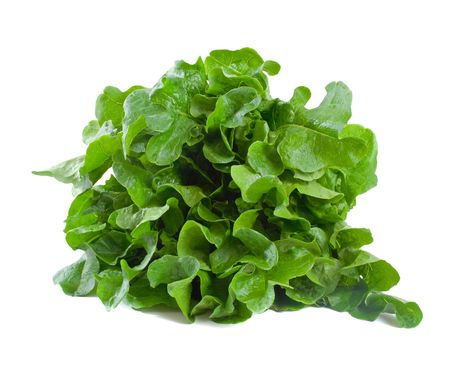 Freshly picked lettuce isolated over white background Stock Photo