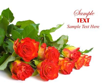 Rosso e giallo rosa gemme su sfondo bianco con copia spazio per il testo