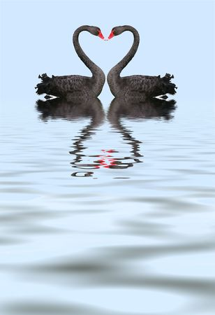 swan pair: Two romantic black swans creating heart shape with necks.