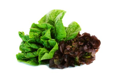 cos: Two varieties of lettuce isolated over black background. Stock Photo