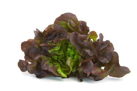 Mignonette Lettuce isolated over white background