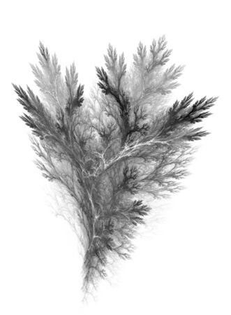 Black and white abstract image of vegetation over white background Stock Photo