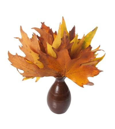 Vase of Autumn leaves isolated over white background Stock Photo