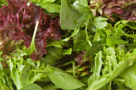 Selection of fresh mixed green salad leaves Stock Photo