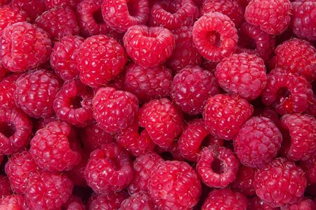 A beautiful selection of freshly picked ripe red raspberries. Stock Photo