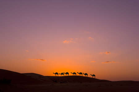 camel caravan in the desert photo