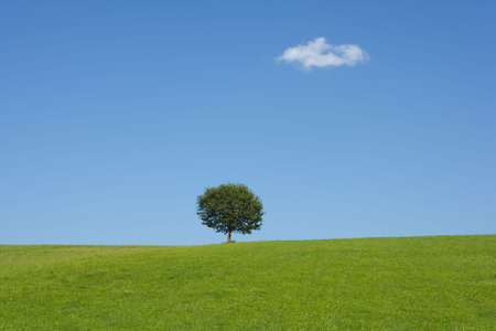 grassy knoll: Landscape with a tree