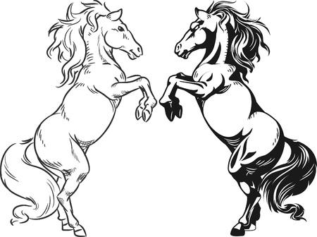 stallion: Sketch of Prancing Stallion or Horse
