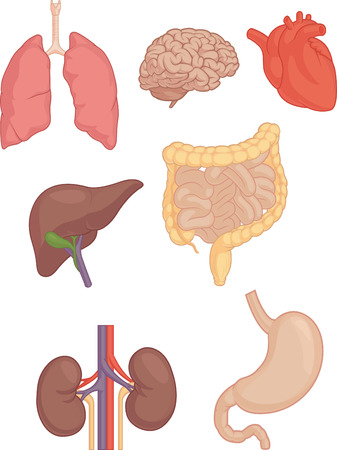 body parts: Human Body Parts - Brain, Lung, Heart, Liver, Intestines Illustration