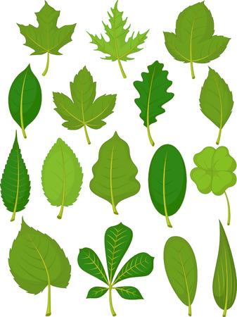 leaves green: Leaves Set - Green Leaves Illustration
