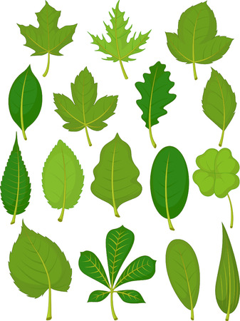 Leaves Set - Green Leaves Ilustracja