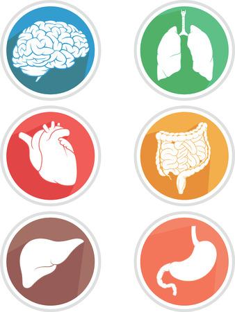 Human Body Organs Icon Vector