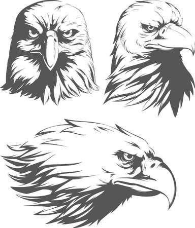 Silhouette Eagle Head Falcon Front Sideview Set Isolated Vector Mascot Badge Vektorové ilustrace