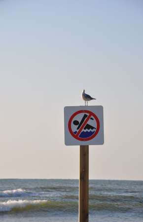 No swimming symbol on a sign on a post with a seagull perched on top with the ocean in the background