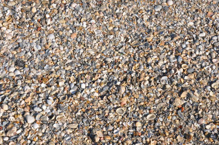 a background of small seashells washed ashore in the sunlight Stock Photo - 8137394