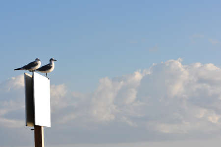 A pair of seagulls in the sunlight sitting on a blank white sign against a blue sky with clouds  Stock Photo