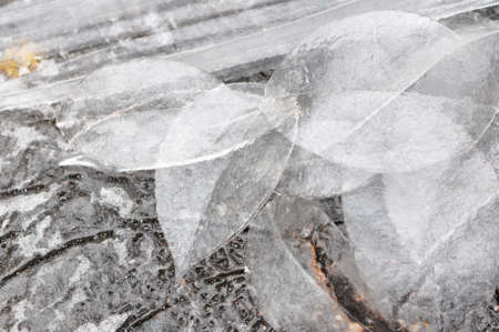A group of leaves made of ice in the winter Stock Photo