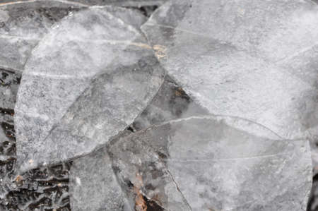 A closeup of a group of leaves of ice Imagens