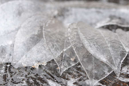 Closeup of a group of leaves of ice Imagens