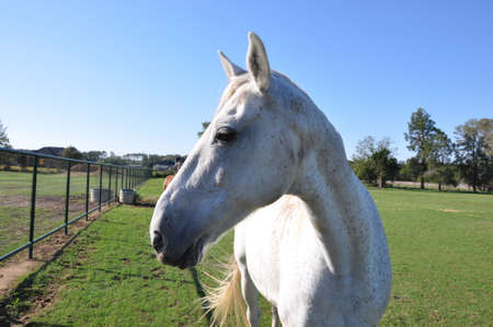 A single white speckled horse in closeup profile