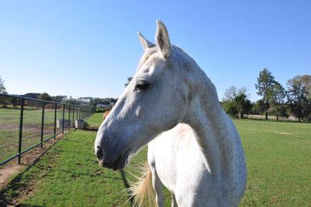 A single white speckled horse in closeup profile