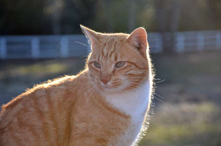 Close up of a green eyed orange tabby cat in the sun