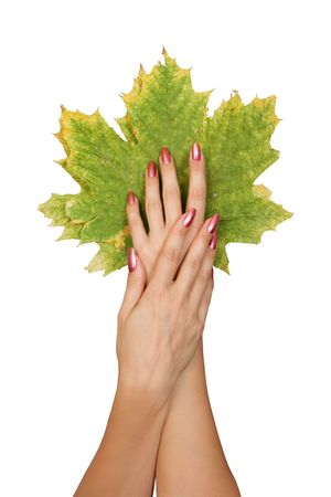 Autumn leaves in fine female hands. Isolated over white background with clipping-path Stock Photo