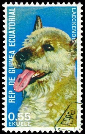 equatorial guinea: EQUATORIAL GUINEA - CIRCA 1974: A stamp printed by  EQUATORIAL GUINEA shows dog Laeckenois, series, circa 1974 Stock Photo