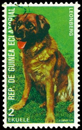 equatorial guinea: EQUATORIAL GUINEA - CIRCA 1974: A stamp printed by  EQUATORIAL GUINEA shows dog Leonberg, series, circa 1974