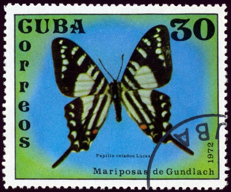 cuba butterfly: Cuba - CIRCA 1972: A stamp printed in Cuba shows butterfly with the inscription �Papilio celadon Lucas�, series, circa 1972.