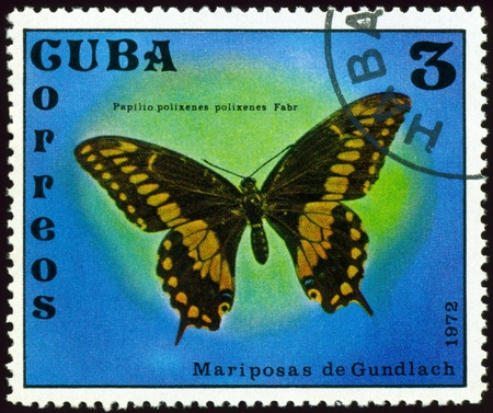 cuba butterfly: Cuba - CIRCA 1972: A stamp printed in Cuba shows butterfly with the inscription �Papilio polixenes polixenes Farb�, series, circa 1972. Stock Photo