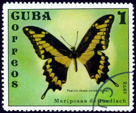cuba butterfly:  Cuba - CIRCA 1972: A stamp printed in Cuba shows butterfly with the inscription �Papilio thoas oviedo Gundl�, series, circa 1972. Stock Photo
