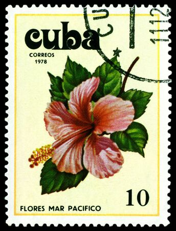 pacifist: Cuba - CIRCA 1978: a stamp printed in Cuba shows image Tues flowers pacifist, series, circa 1978